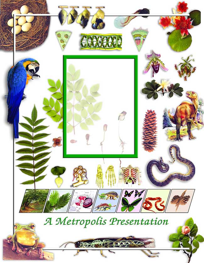Practical Journal of Biology